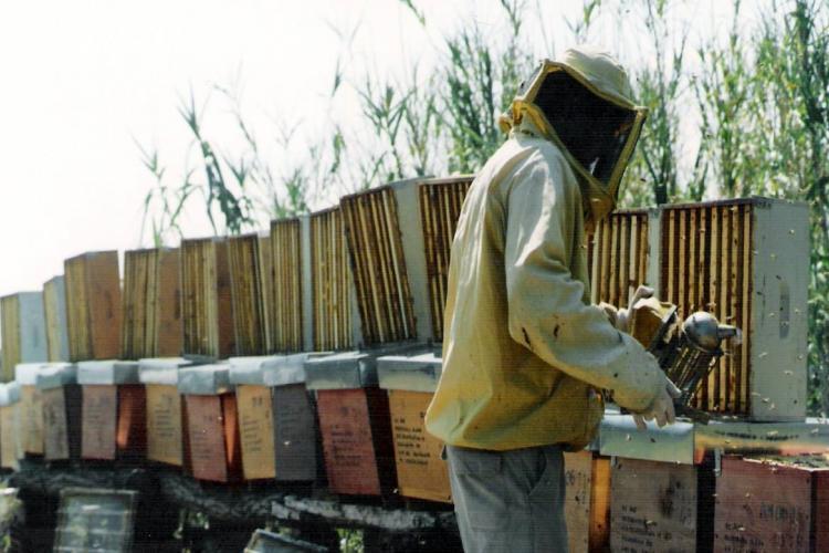 Azienda L'Oro del Daino, il miele biologico della provincia di Rimini