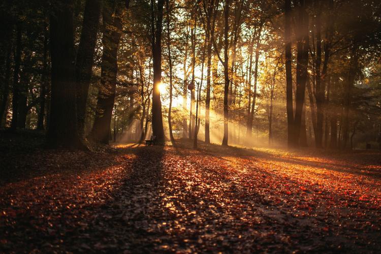 Foliage a Rimini: 6 posti per ammirare i colori dell'autunno