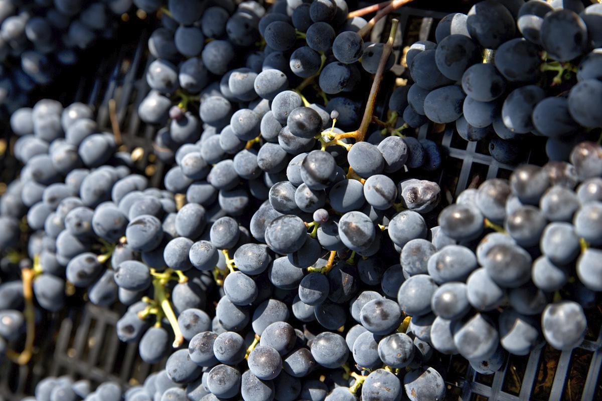 Vini tipici di Rimini da degustare